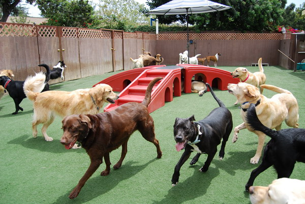 Dog Play Area In Backyard : Bone Backyard Dog Daycare  Dog Boarding Orange County  The Bone